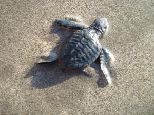 samedi 3 août : Kuta beach p10301033-300x225